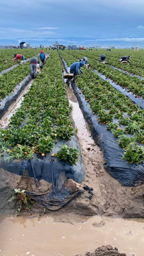 BROTE DE COVID EN CAMPO AGRICOLA DE CALIFORNIA MANTIENE EN CUARENTENA A 200 MEXICANOS