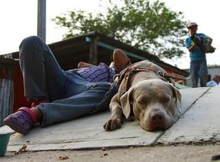 Bolillo, el perro migrante que también busca el sueño americano