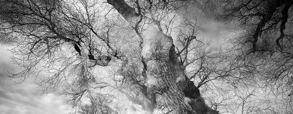 fond ecran arbre.jpg