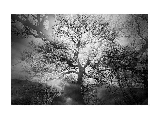 Le vieux chêne de Marsanne