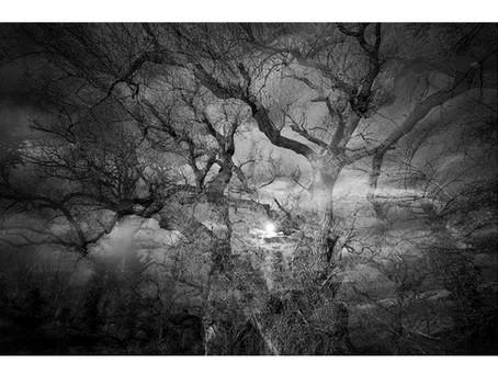 Une histoire d'arbres...
