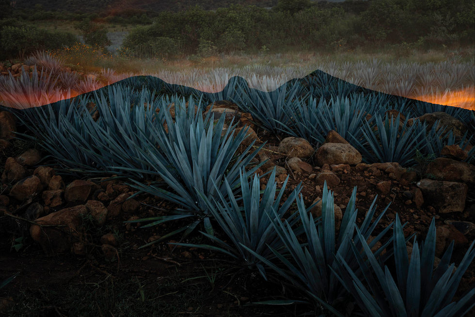 Volcan de Mi Tierra (Tequila - Mexico)