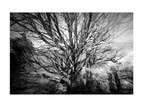 Le vieux chêne dans la forêt de Saou