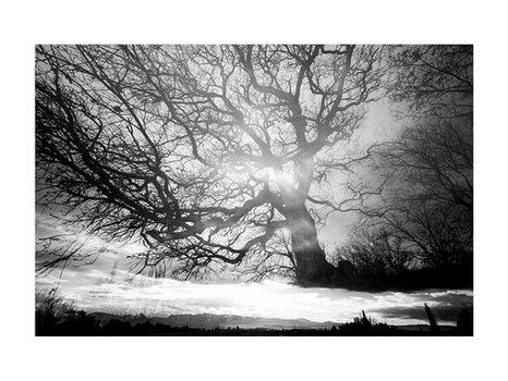 La lumière de l'arbre