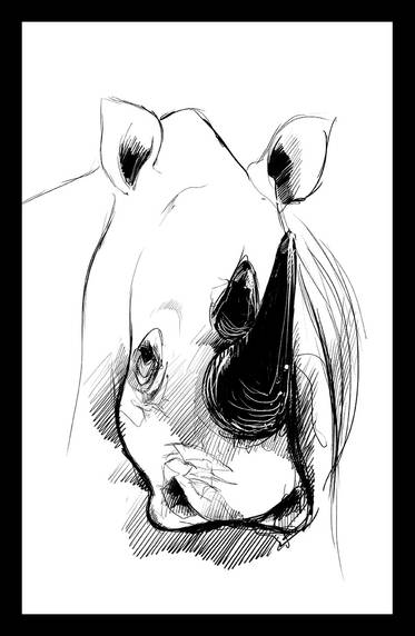 Rhino #01