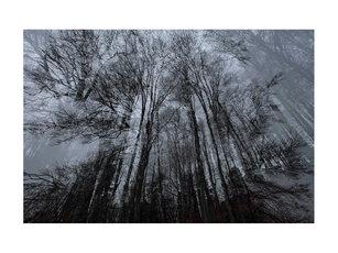 l'encre des arbres #04