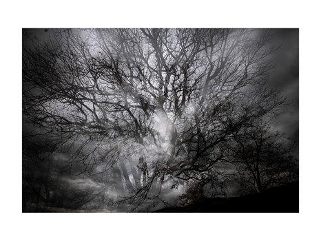 L'encre des arbres #02