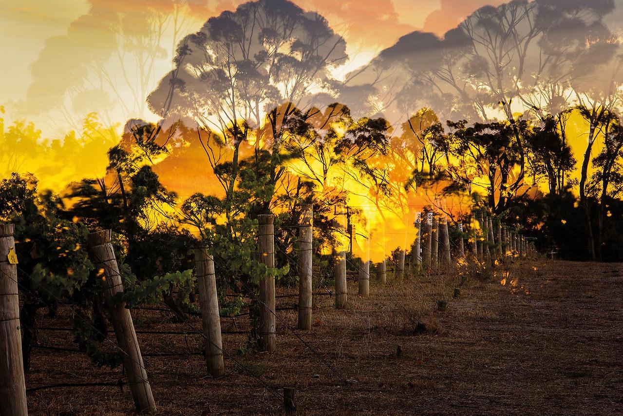 Cape Mentelle (Australia)