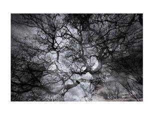 L'encre des arbres