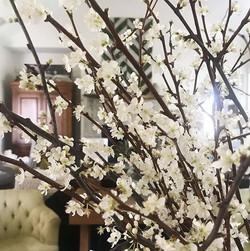 branches_wild plum