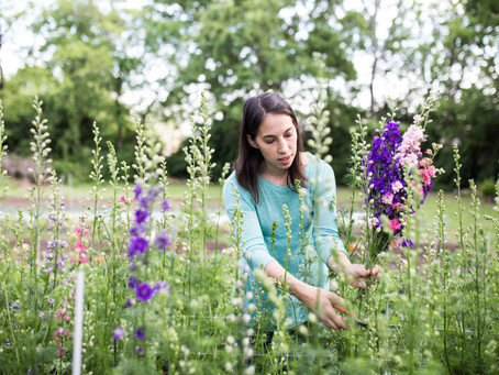 Easy Introduction to Growing Cut Flowers