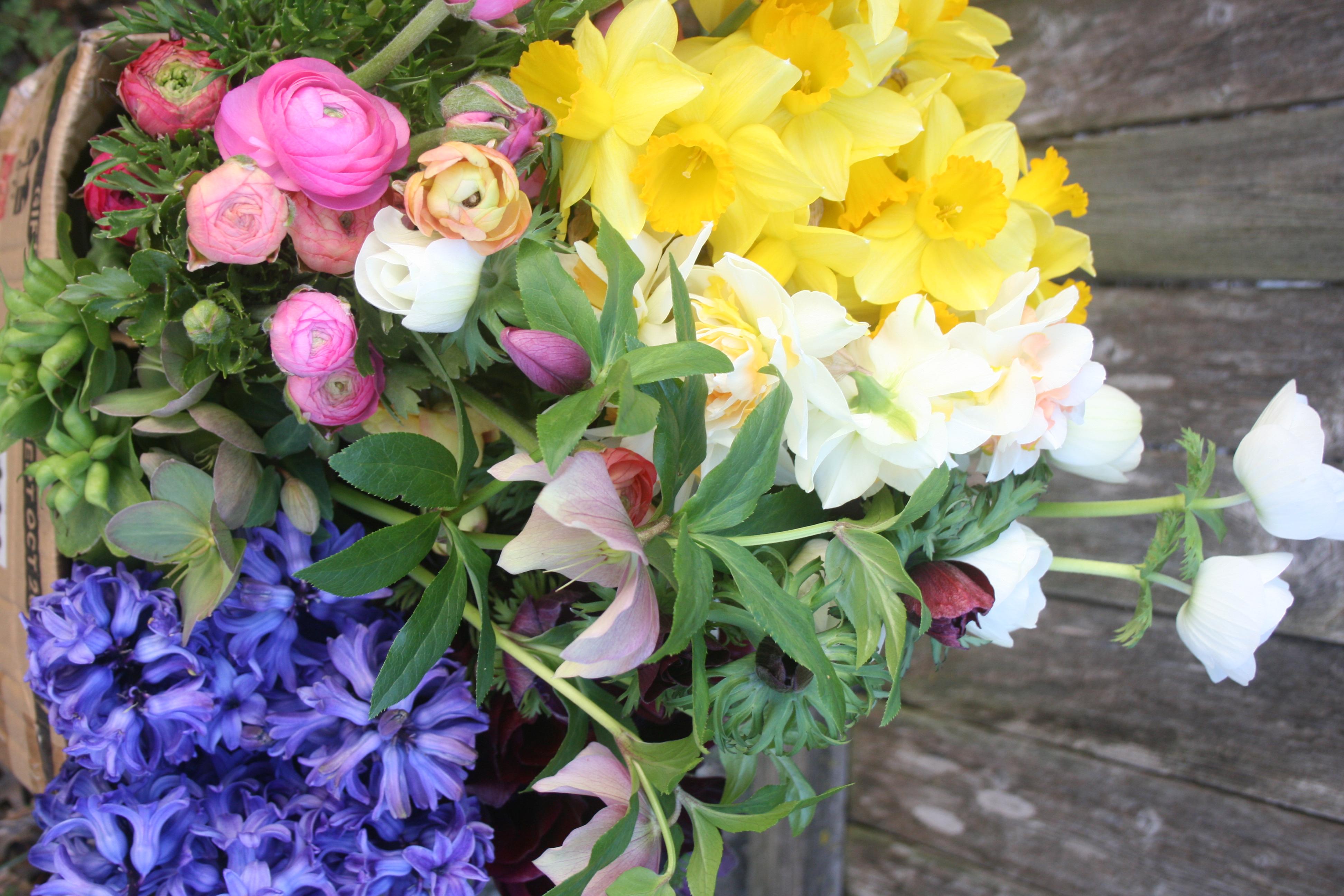 Ranunculus Narcissus Hellebore Hyacinth