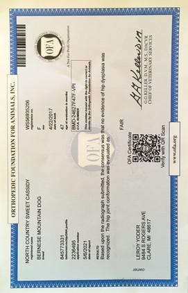 Cassidy's OFA Certificate