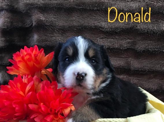Donald