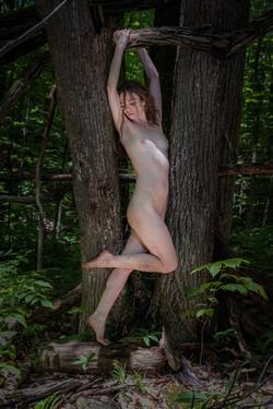 CFrenette-Jay_Ban-en_forêt-17