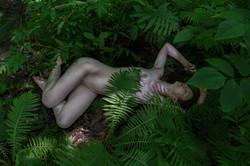 CFrenette-Jay_Ban-en_forêt-13
