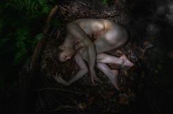 CFrenette-Jay_Ban-en_forêt-8