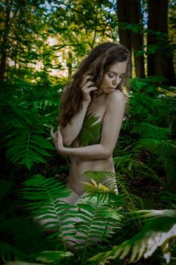 CFrenette-Jay_Ban-en_forêt-7