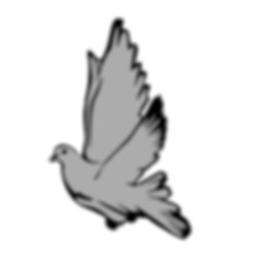 funky dove.png