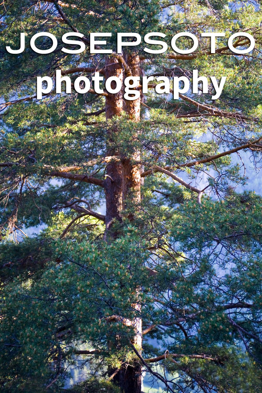 A14_3621-Edit.jpg