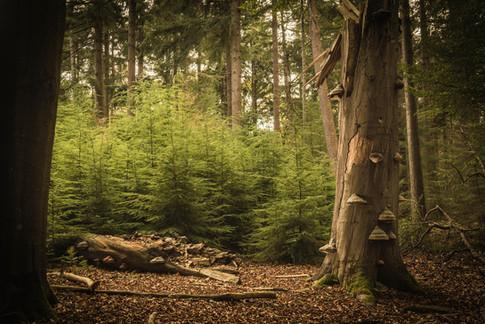 Woodland-1363.jpg