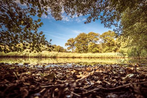 Woodland-1325-HDR.jpg