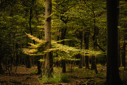Woodland-1372.jpg