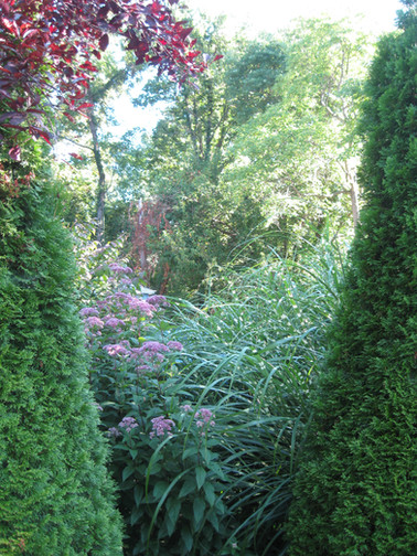 yard plants august 2017 028.jpg