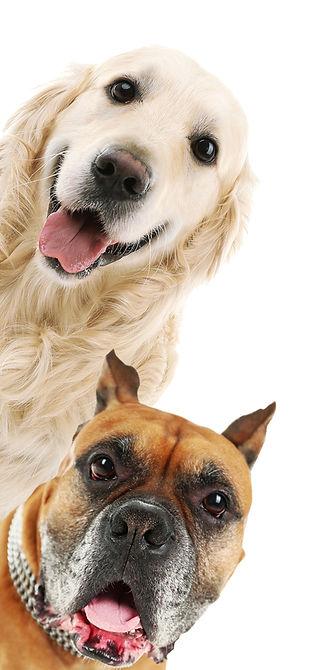כלבים 1.jpg