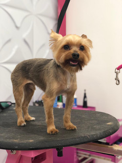 Neo pet spa is a Dog Grooming salon