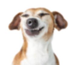 Funny dog disgust, denial, disagreement
