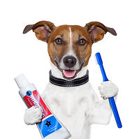 teeth cleaning dog with toothpaste and t