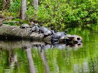Turtle Tree.jpg