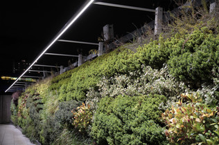 How to light a living wall
