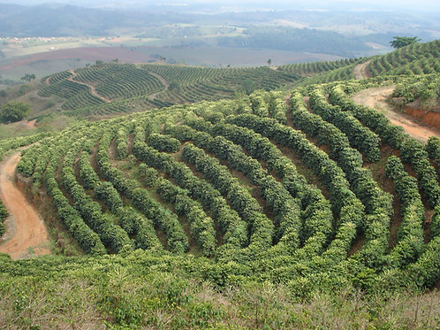 Brazil - Fazenda Palmital