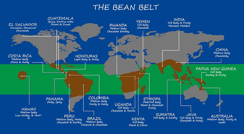 BeanBelt4.png