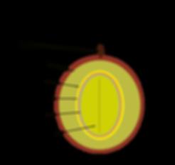 Inside a coffee cherry