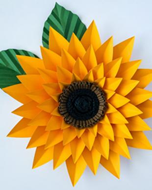 CLASS sunflower.png