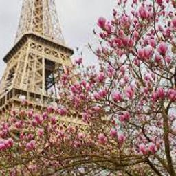 Springtime in Paris EARLY BIRD