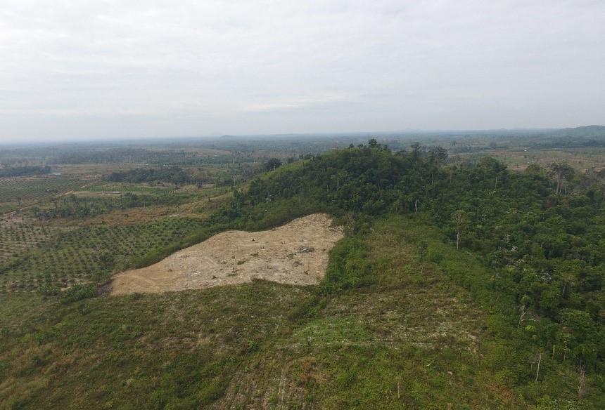 cashew plantations