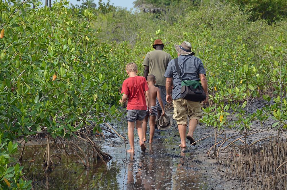 Karen Barton CAORC fellow Senegal mangrove seeds