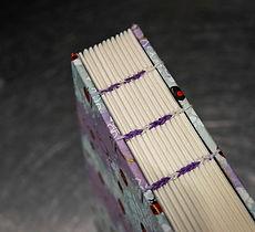 Coptic_books_ladybeetle_2.jpg