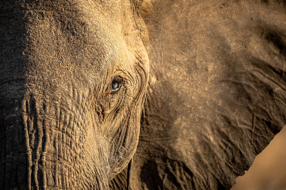 The Story of the Blind Elephant