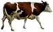 Brown%20and%20White%20Cow%20_edited.png