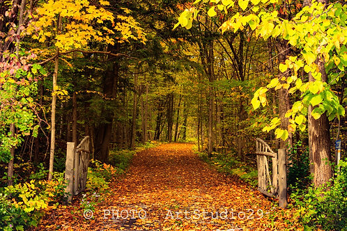 Autumn Landscape Photography - Forest trail with a gate at Fall - photo ArtStudio29
