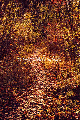 Forest path at Fall