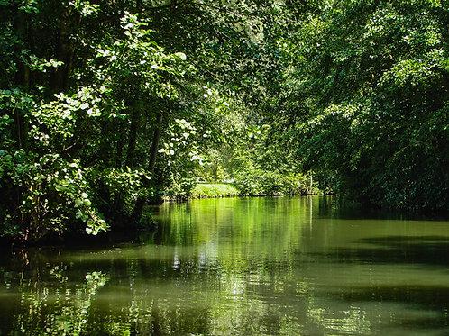 Green Reflections on Canal du Midi (digital file)