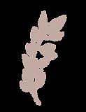 Pink Leaf-26.png
