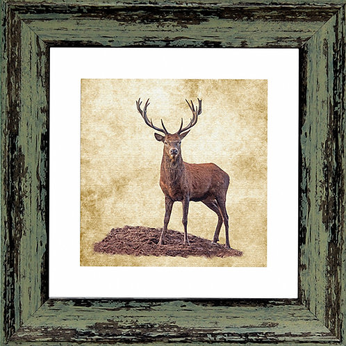 Stag Square Frame Photo