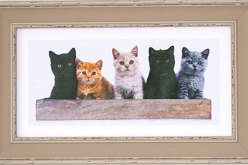 Kitten's Rectangular Frame Photo